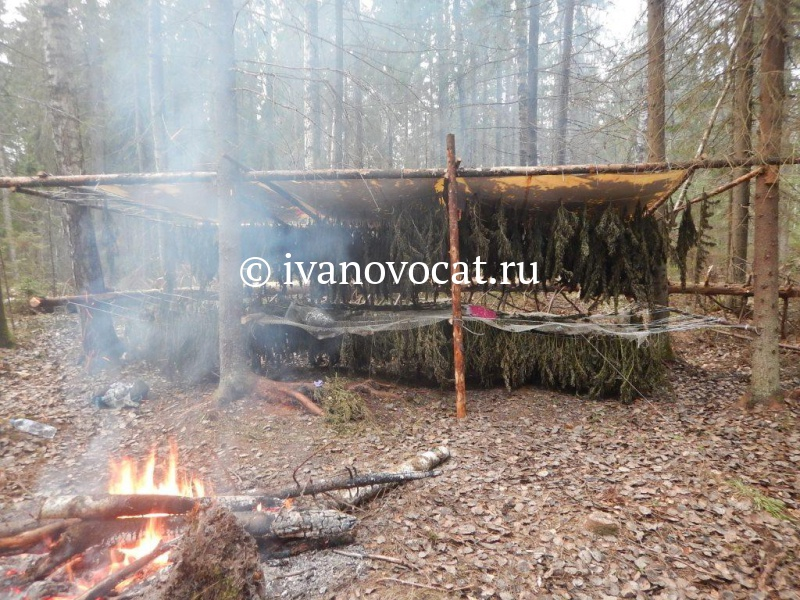Целую плантацию конопли вырастил гражданин Иванова взаброшенной деревне