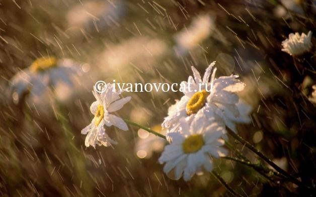 Погода в новоспасском точный прогноз
