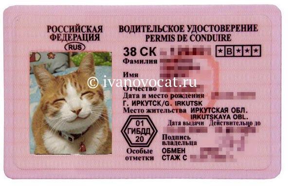 Поздравления при получение водительских прав